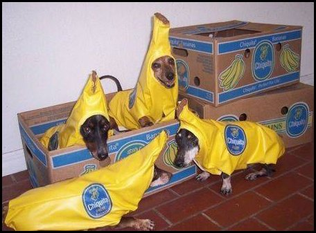 Dog Bananas
